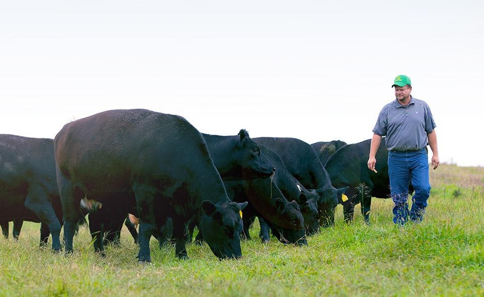 Farmer in field with cattle