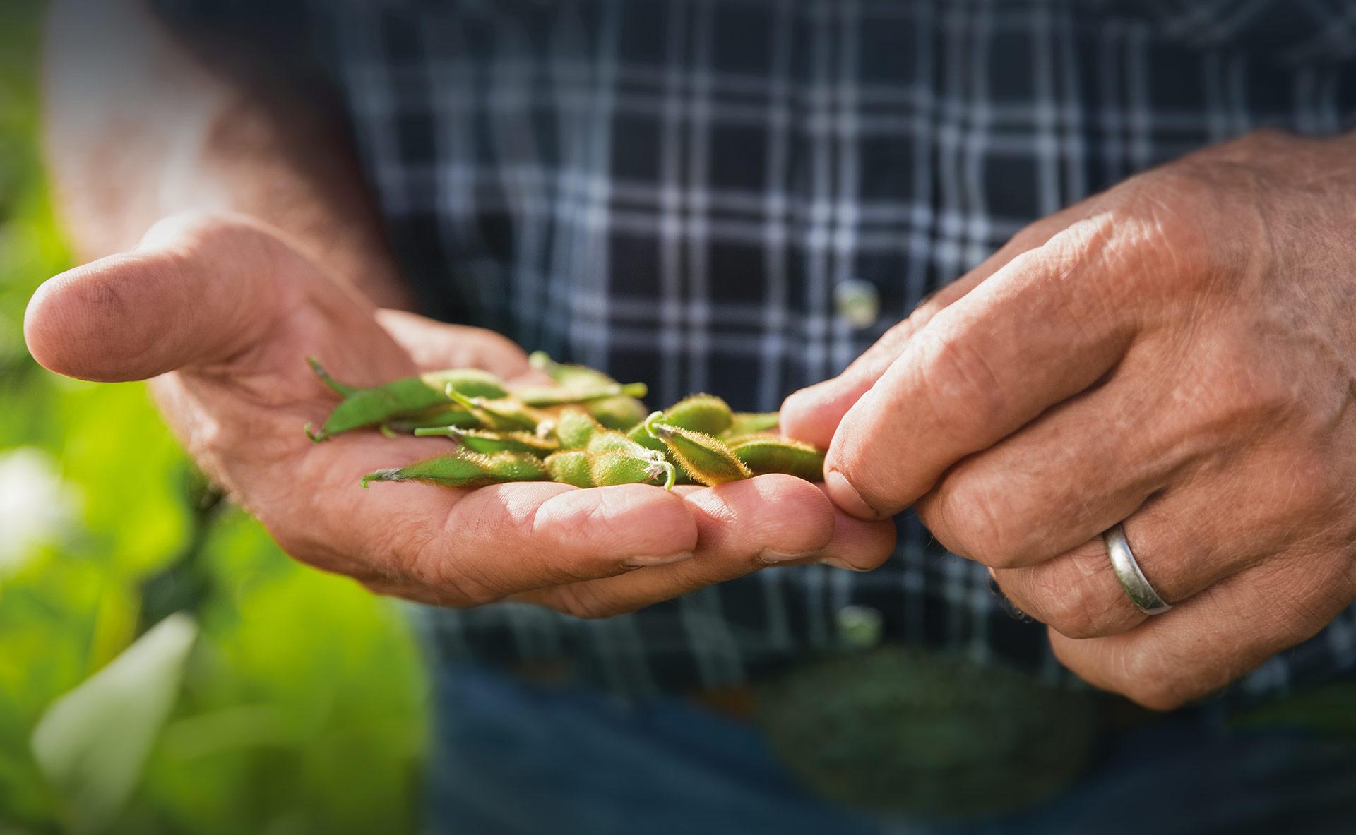 Farmer inspecting seeds